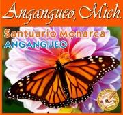 VER FOTOS de mi VIAJE por SANTUARIO MONARCA (CLIC)